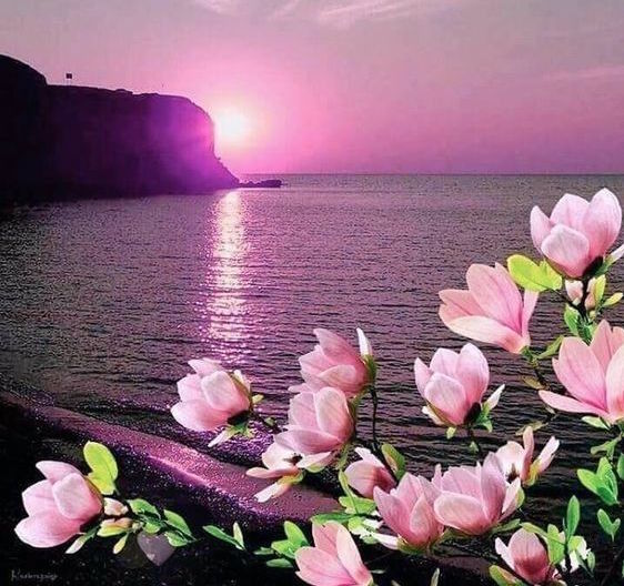 libra magnolia moon
