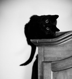 black kitty copy