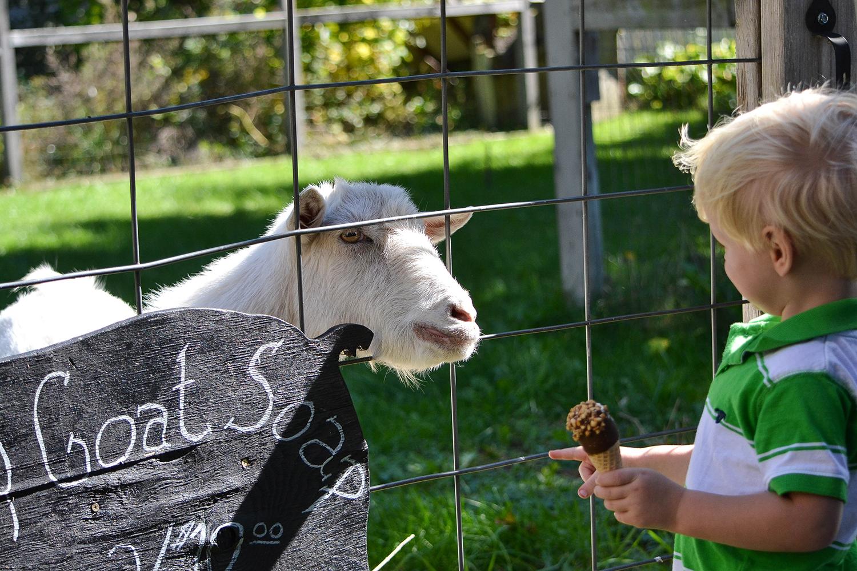 goat-soap