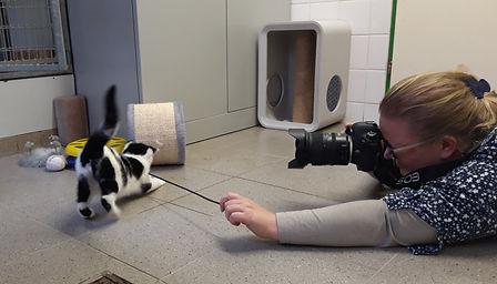 Fotograag in actie om kittens te fotograferen in het asiel
