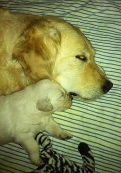 kona+sleeping+with+pup