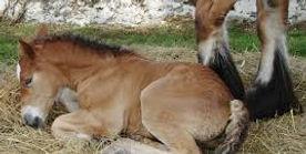 foaling cctv.jpg