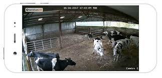 calving cctv.jpg