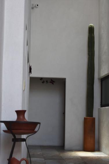 Oaxacan cactus