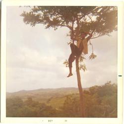 12 Kid n tree 7c