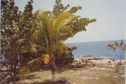 Tropical scene 10a