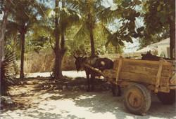 10 Tropical scene Wagon 10b