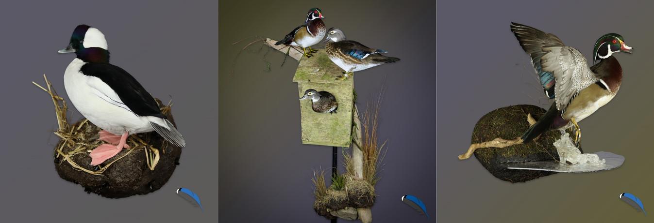 Feather Artistics