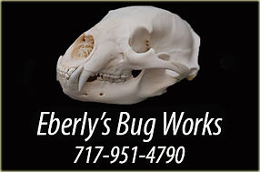 eberlybugworks1.jpg