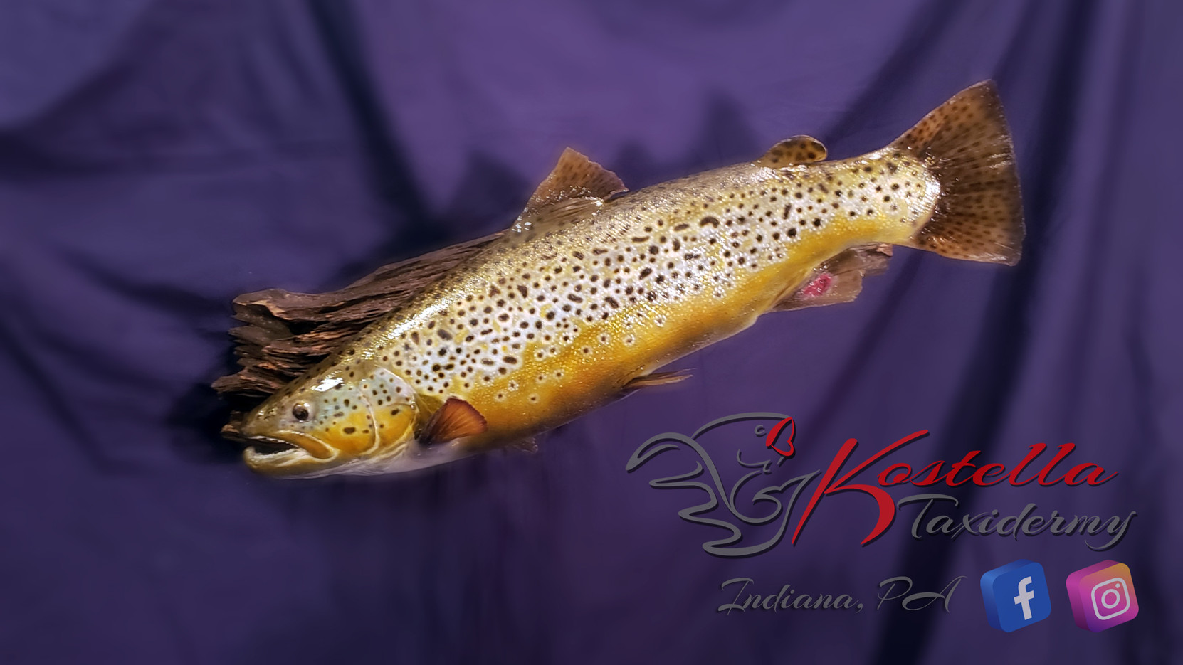 Kostella Taxidermy