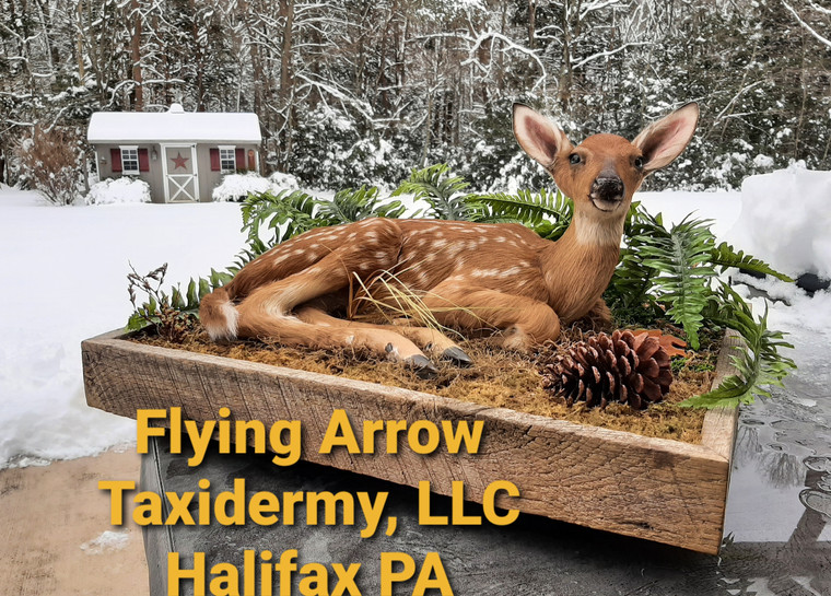 Flying Arrow Taxidermy LLC