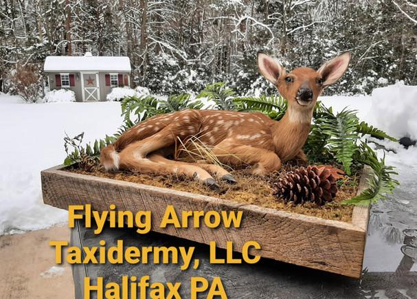 Flying Arrow Taxidermy LLC