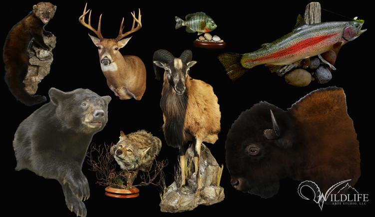 Wildlife Arts Studio