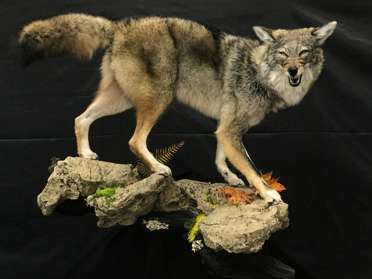 Forever Ridge Taxidermy