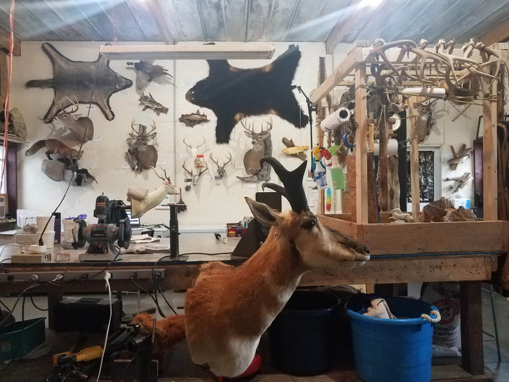 Cutchins Trail Taxidermy