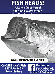 bruch fish ad.jpg