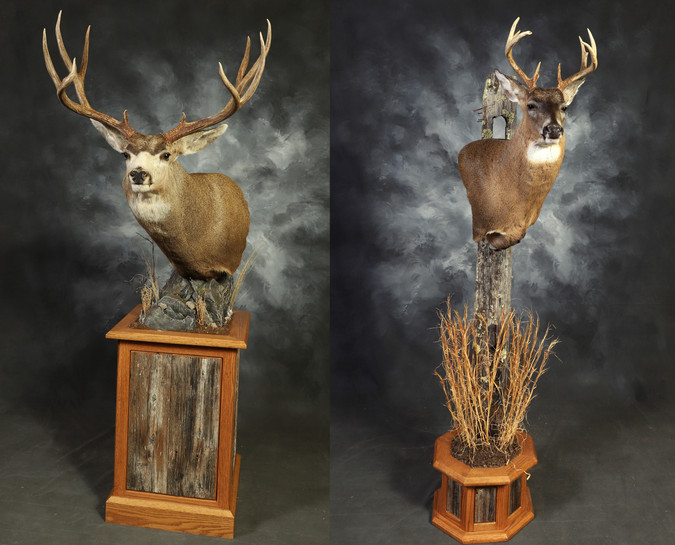 Visions of Nature - Jorgensen's Taxidermy