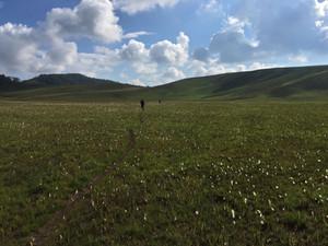 Bemenevika is named for this white grass