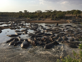 Hippo Pod - serious biomass!