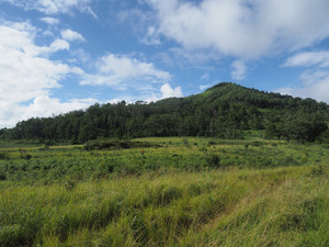 Land to reforest, with edge of Amber Mountain rainforest in the background