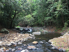 Amber Mountain Rainforest Stream
