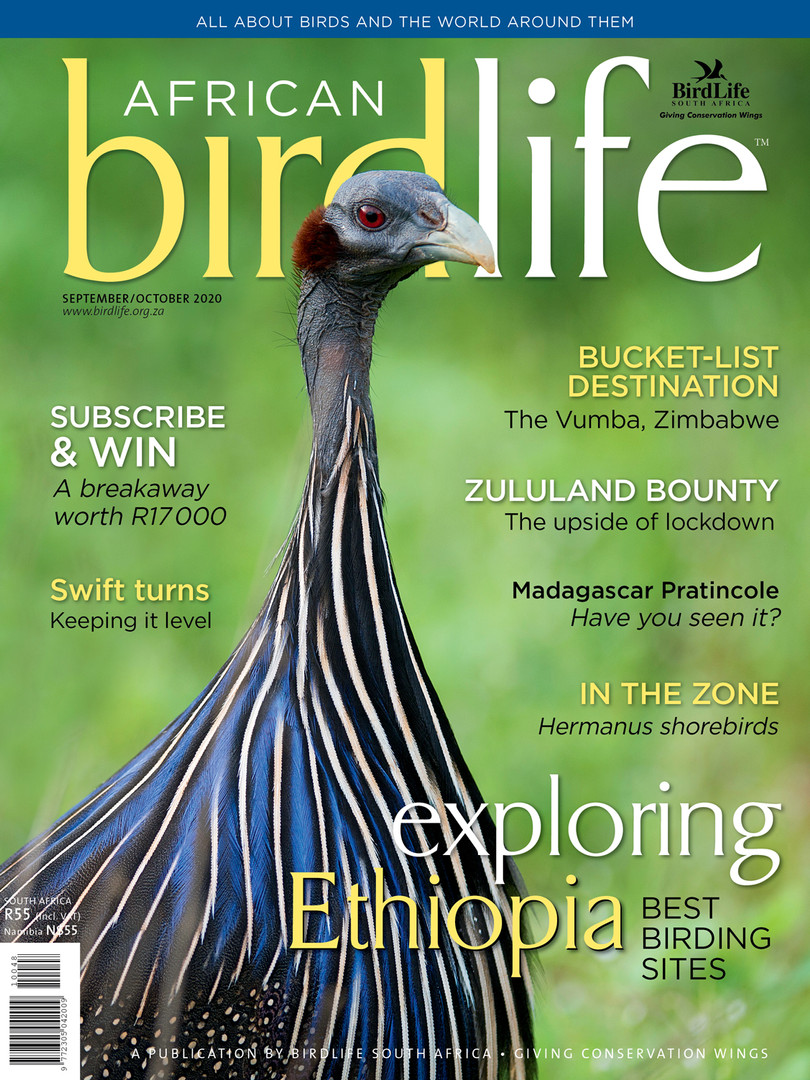 African Birdlife