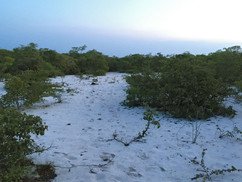 Open sandy glade at Bongalava Forest