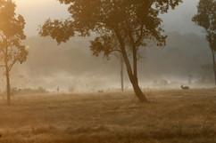Grassy area at dawn
