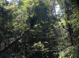 Eastern Rainforest