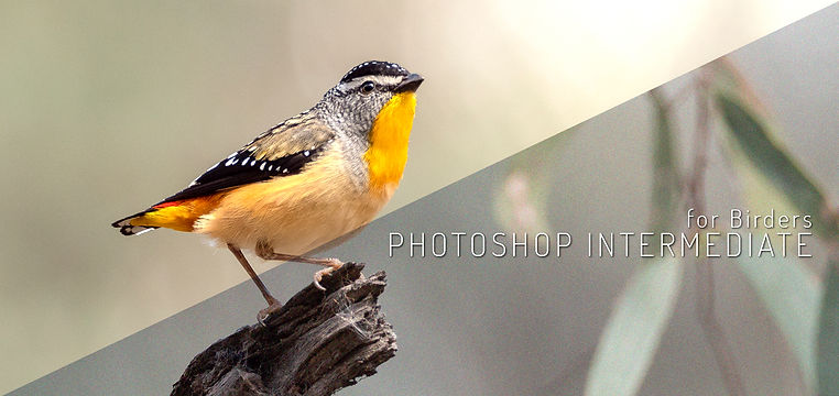 Photoshop 1 for birders banner PA077598.