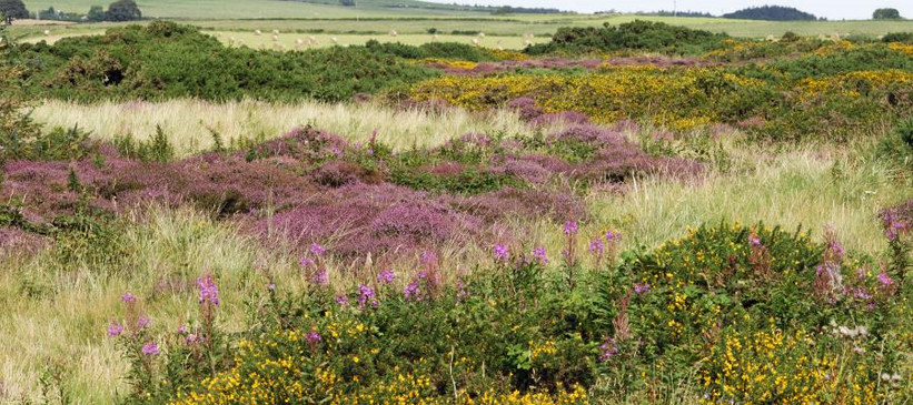 Lowland Heath Assessment