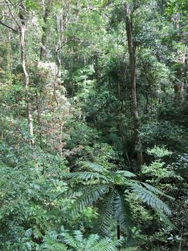 Amber Mountain rainforest