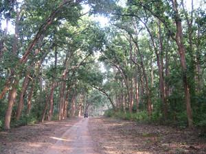 Forest Track in Corbett