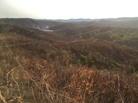 Recently burned dry forest that formerly held some rare and localized reptiles