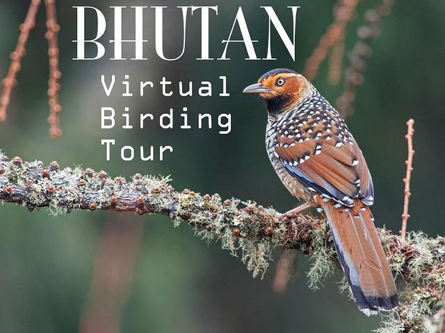 BHUTAN Virtual Birding Tour