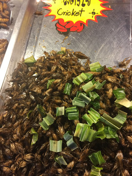 Crickets as street food