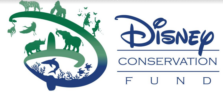Neotropical Bird Suvey in Guatemala for Disney Conservation Fund