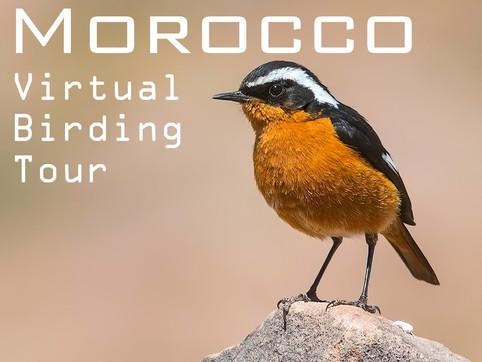 MOROCCO Virtual Birding Tour