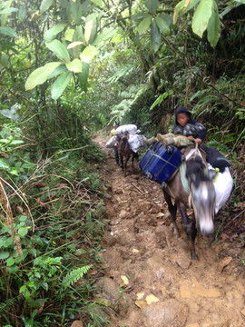 Muddy trail up Kitanglad (for Philippine Eagle)