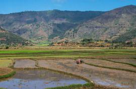 Highland rice paddies