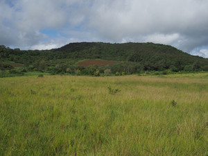 The reforestation project will (hopefully) turn this savanna back into forest
