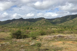 Distant forest in the transitional Daraina region
