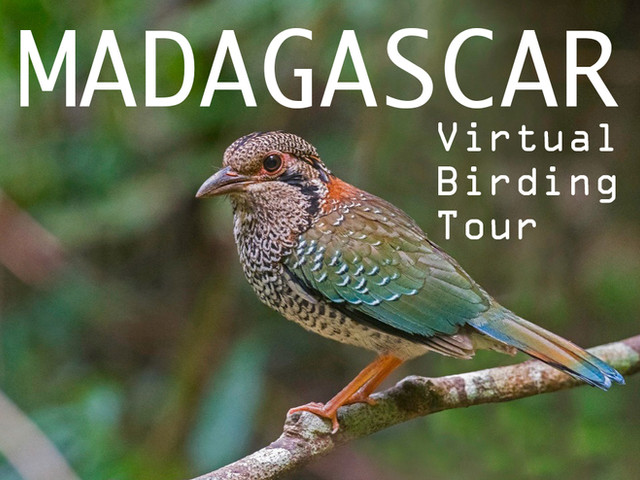 MADAGASCAR Virtual Birding Tour