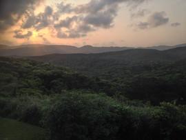 Okinawa Rail forest