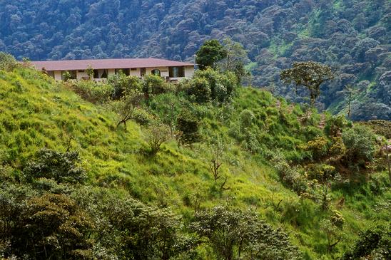 Tandayapa Forest Regeneration