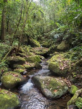 Marojejy rainforest stream at low elevation
