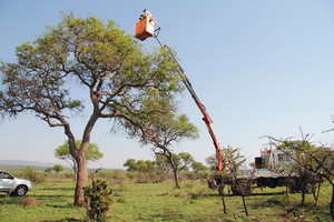 """The """"cherry picker"""" accessing a high vulture nest"""