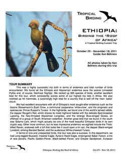 Ethiopia Custom