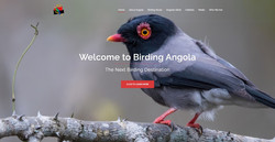 Birding Angola