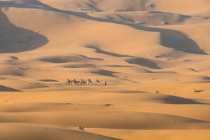 Camels and Dunes in the Sahara of southeastern Morocco